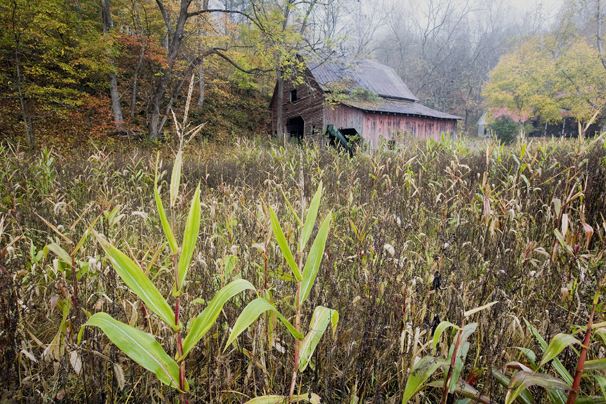 Autumn_Barn_field_use