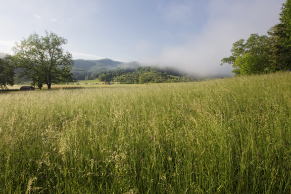 Valle Crucis field_farm