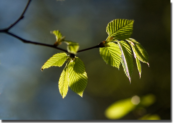 New_leaves
