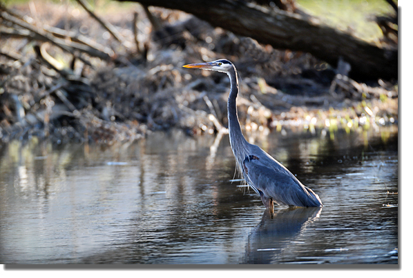 Bird_heron_blog