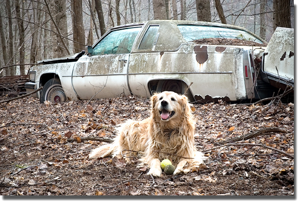 Junkyard_dog_blog