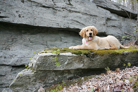 Annie on the rocks